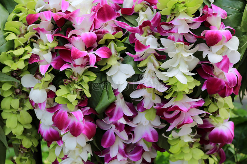 Hawaiian Orchid lei. Colorful hawaiian lei made of orchids royalty free stock photography