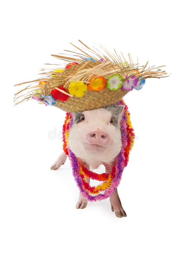 Free Hawaiian Pig Wearing Hat And Lei Stock Photo - 48758800