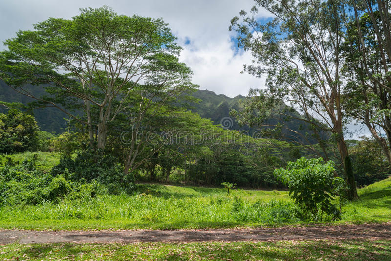 Download Hawaiian Rain Forest In The Koolaus Stock Photo   Image Of  Mountains, Oahu:
