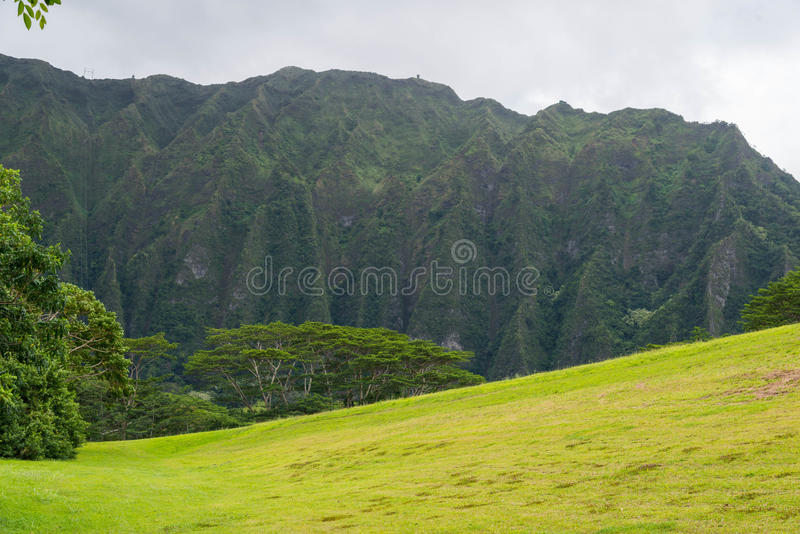 Download Hawaiian Rain Forest In The Koolaus Stock Photo   Image Of Trail,  Green: