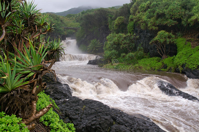 Hawaiian river. Rapids, jungle and black cooled lava rocks stock photography
