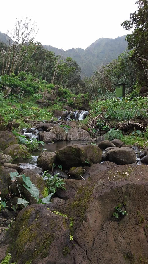 Hawaiian streams stock images