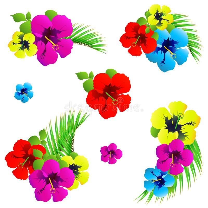 Hawaiibo blommar, exotiska växter som isoleras på en vit stock illustrationer