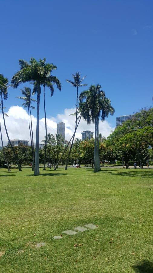 Hawaiibo parkerar fotografering för bildbyråer