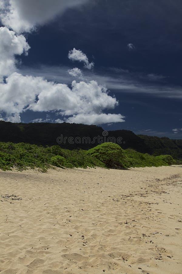Free Hawaiin Beach Stock Photography - 29518712