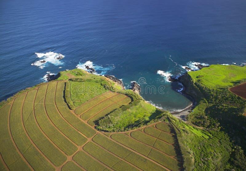 Download Hawaiische Küstenlandwirtschaft Stockbild - Bild von field, ananas: 28157