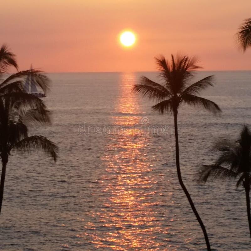 Hawaiische Palmen des Ozeansonnenuntergangs w lizenzfreies stockfoto