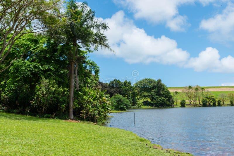 Hawaiischer Regen-Wald im Koolaus stockfoto