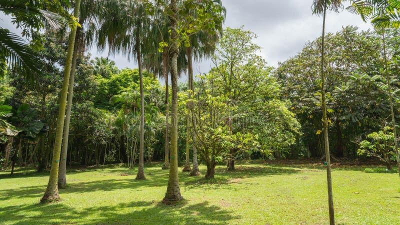 Hawaiischer Regen-Wald im Koolaus stockbilder