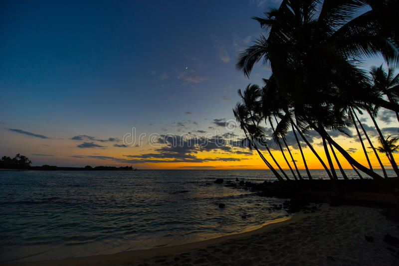 Hawaiischer Sonnenuntergang mit tropischen Palmeschattenbildern stockfoto