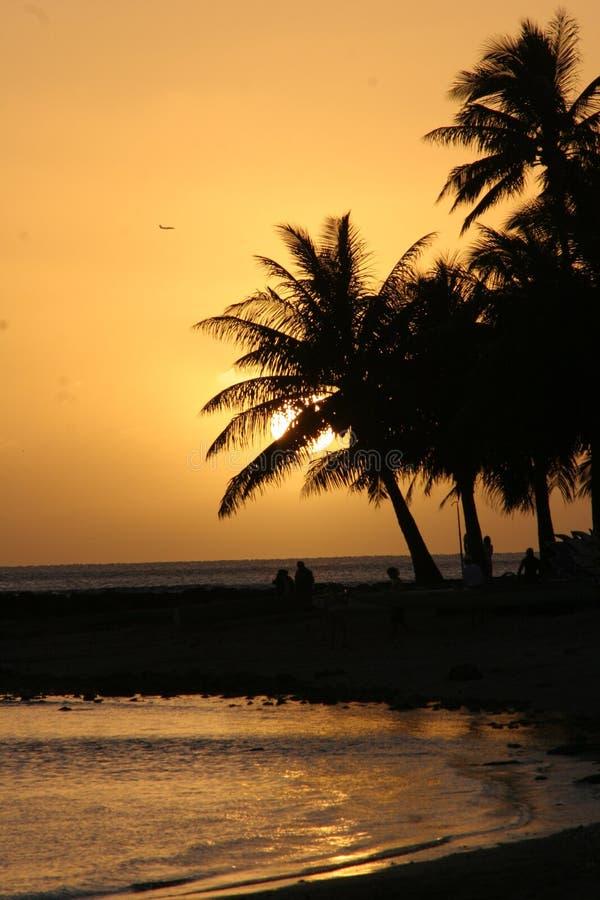 hawajczyka słońca zdjęcie stock