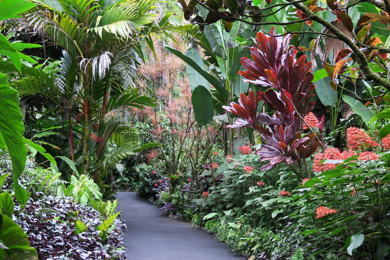 Hawaje Tropikalny ogród botaniczny obrazy royalty free