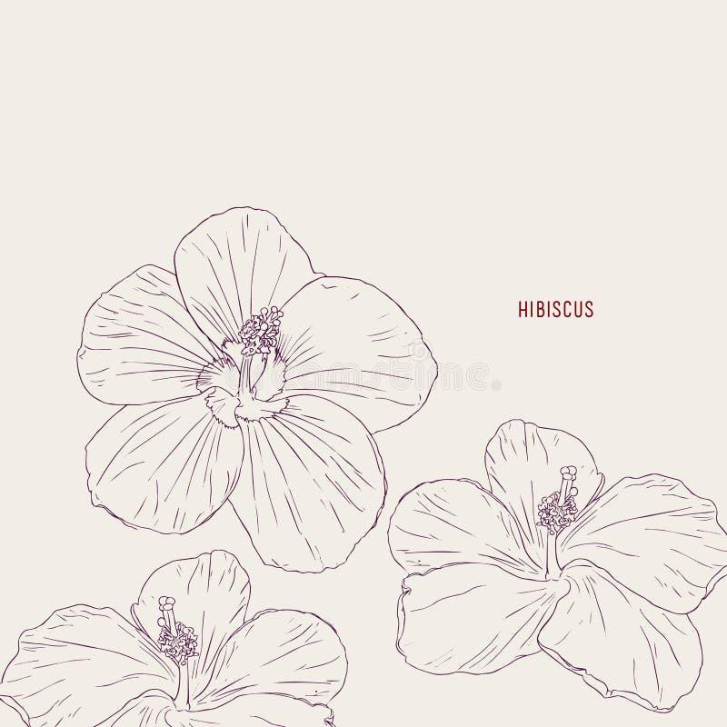 Hawajscy poślubników kwiaty, nakreślenie wektor ilustracja wektor