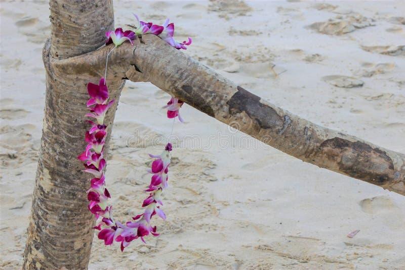 Hawajscy storczykowi lei na driftwood Lanikai Wyrzucać na brzeg Oahu, Hawaje fotografia royalty free