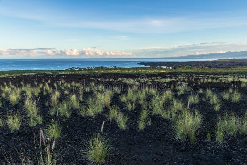 Hawajska linia brzegowa, Duża wyspa Trawa czub w lawy skale w przedpolu Ocean Spokojny, Mauna Kea w odległości obrazy royalty free