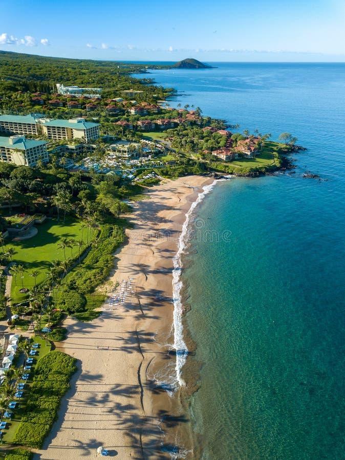 Hawajski linia brzegowa widok z długimi drzewko palmowe cieniami fotografia royalty free