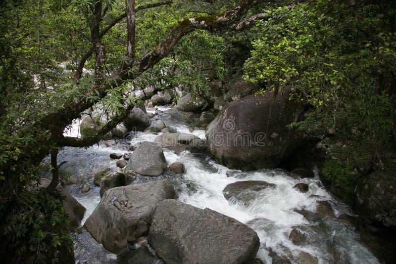 Hawajski strumień obraz royalty free