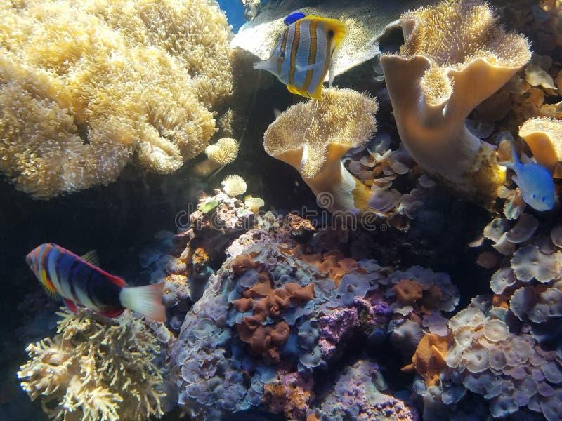 Hawajskie życie i siedlisko morskie obrazy stock
