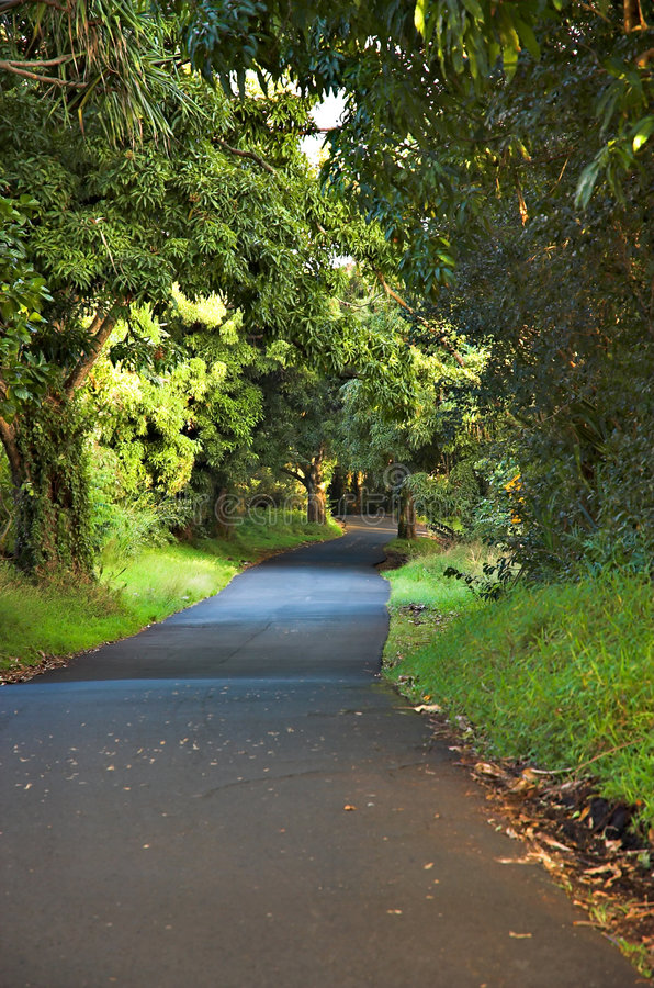 Download Hawiian Country Lane stock photo. Image of journey, ahead - 515888