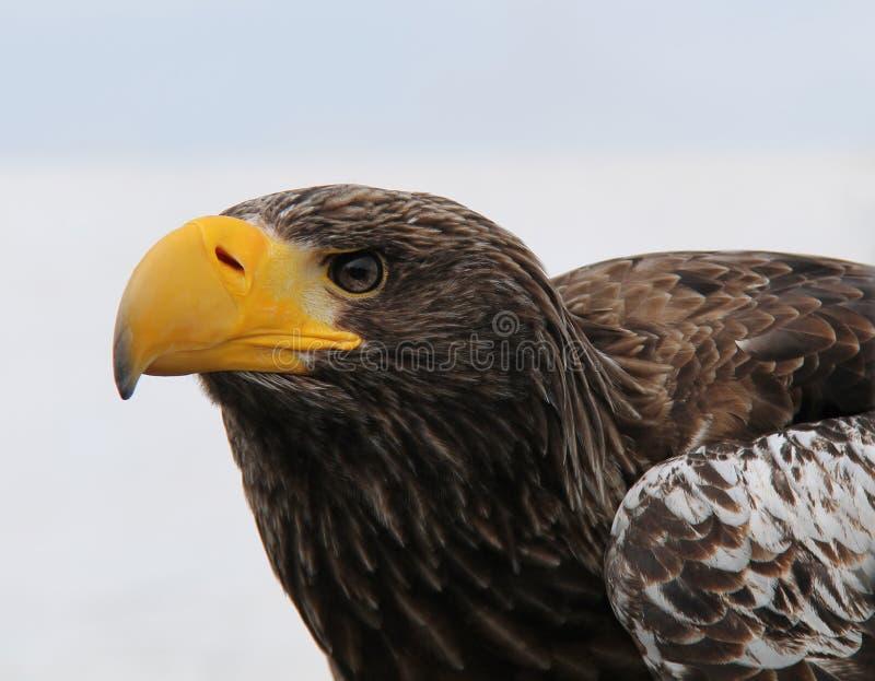 Download Hawk Bird de proie image stock. Image du griffes, animal - 77152361
