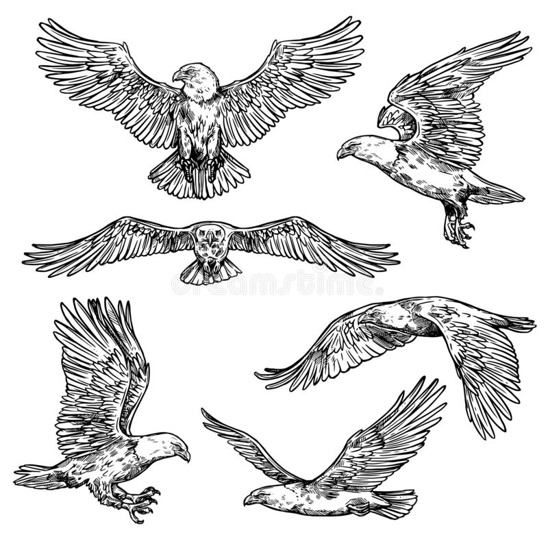 Hawk or eagle sketch, flying falcon. Eagle flight sketches, bird with spread wings and sharp claws with beak. Vector isolated hawk icon, symbol of nobility vector illustration