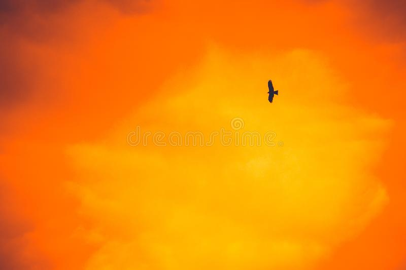 Hawk flying in the sky royalty free stock photos