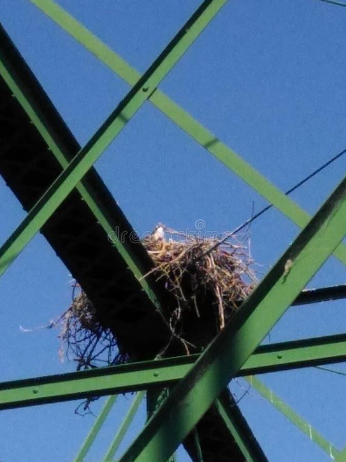 Hawk Nest arkivbild