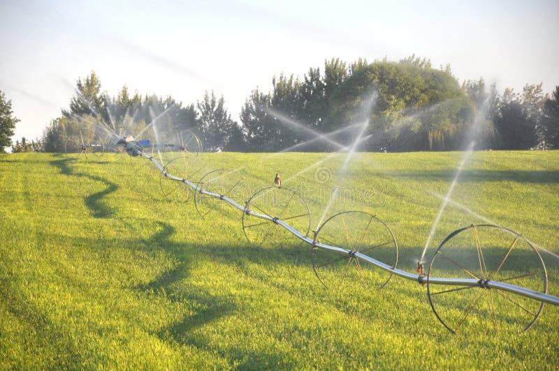 Hawk Resting auf Bewässerungs-Rad-Linie stockfotos