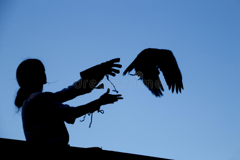 Hawk silhouette stock image