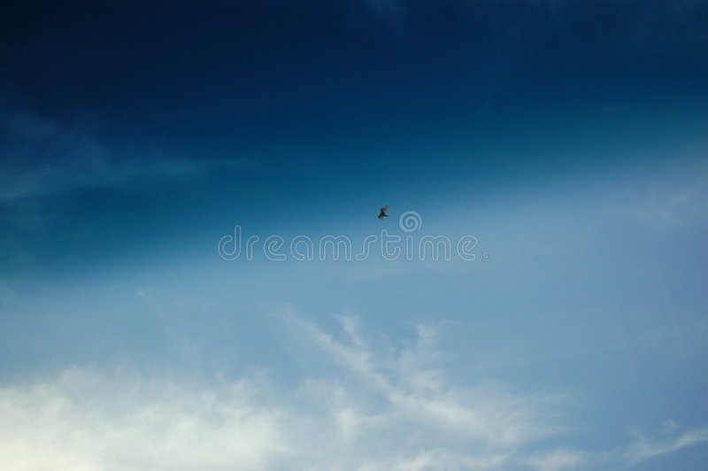 Download Hawk Soaring Stock Image - Image: 6219531