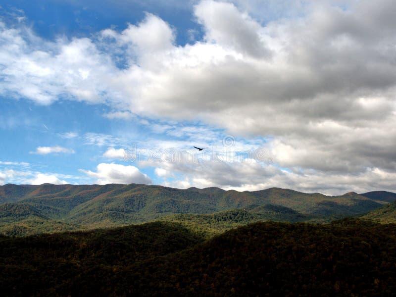 Hawk Soaring au-dessus d'arbre a couvert la chaîne de montagne 2 images stock