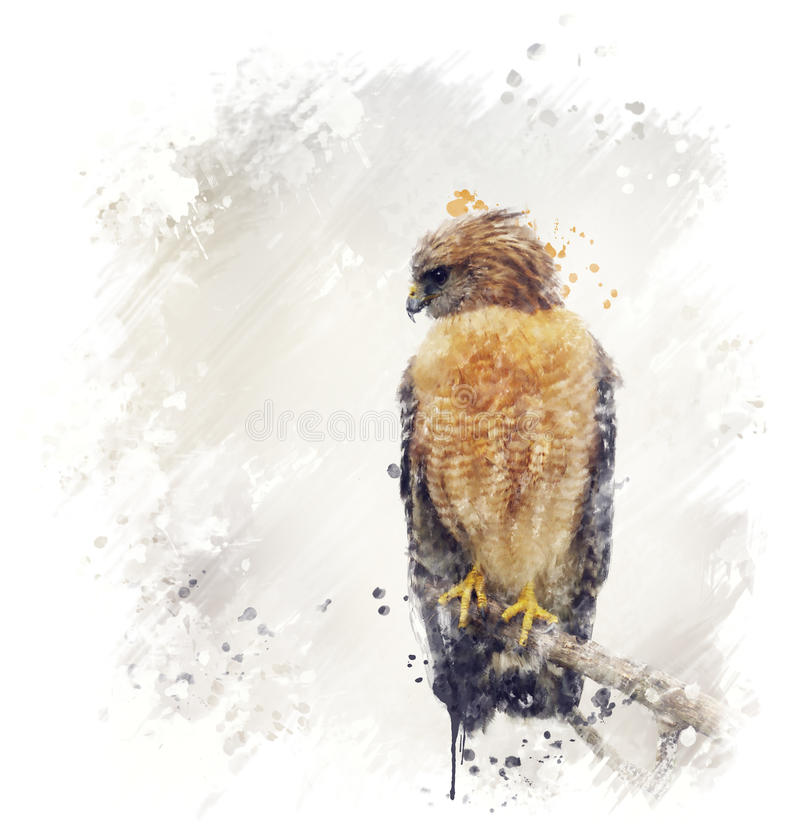 Hawk Watercolor llevado a hombros rojo ilustración del vector