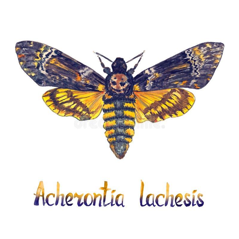 Hawkmoth principal de muerte del Lachesis del Acherontia el mayor, ladrón de la abeja, ejemplo pintado a mano de la acuarela con  libre illustration