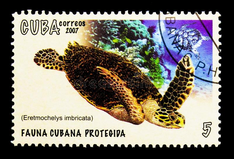 Hawksbill Turtle Eretmochelys imbricata, Cuban fauna protected serie, circa 2007. MOSCOW, RUSSIA - NOVEMBER 25, 2017: A stamp printed in Cuba shows Hawksbill royalty free stock image