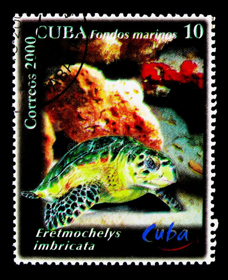 Hawksbill Turtle (Eretmochelys imbricata), World Tourism Day ser. MOSCOW, RUSSIA - NOVEMBER 25, 2017: A stamp printed in Cuba shows Hawksbill Turtle ( royalty free stock images