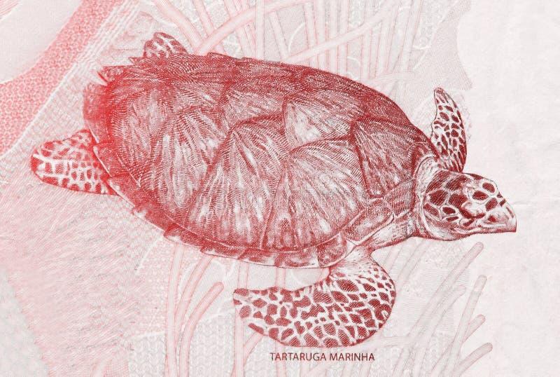 Hawksbillzeeschildpad op het fragment van twee Braziliaans echt bankbiljetclose-up stock foto's
