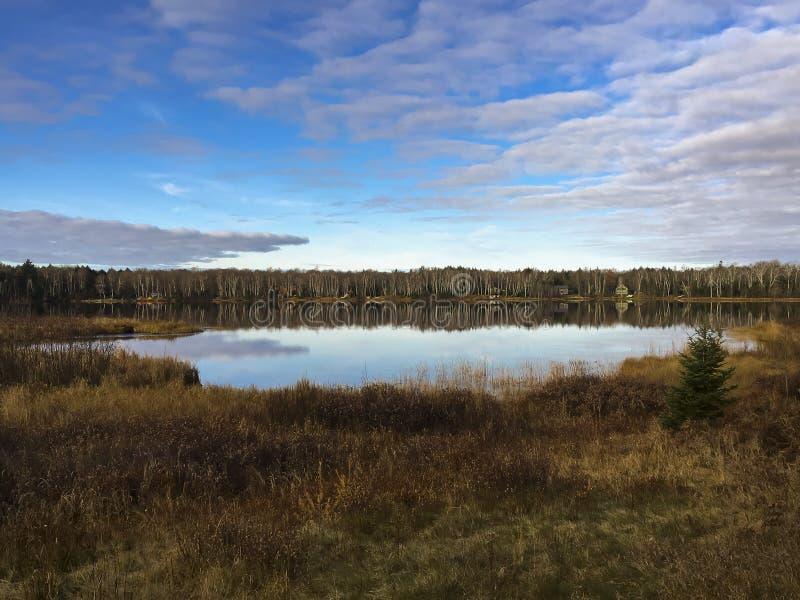 Hawkweed orange dans le Wisconsin du nord images stock