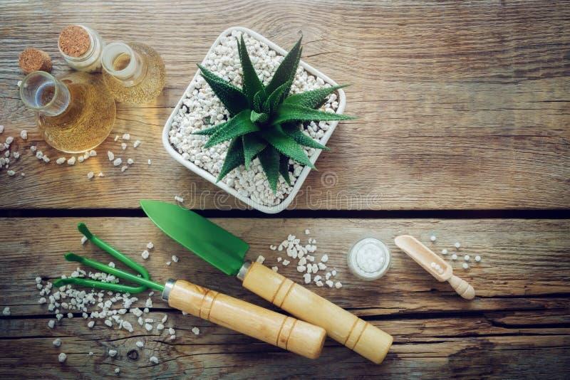Haworthia-Succulent im Blumentopf, in den Minigartenwerkzeugen und in den homöopathischen Abhilfen für Anlage Beschneidungspfad e lizenzfreies stockfoto