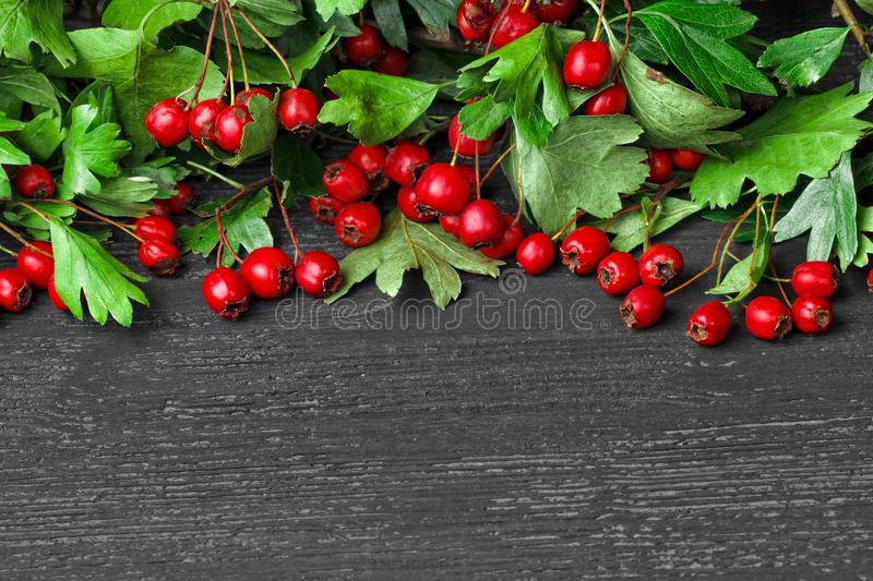 Hawthorn berry. Crataegus on black wooden table.Autumn berries, frame concept.Seasonal background royalty free stock image