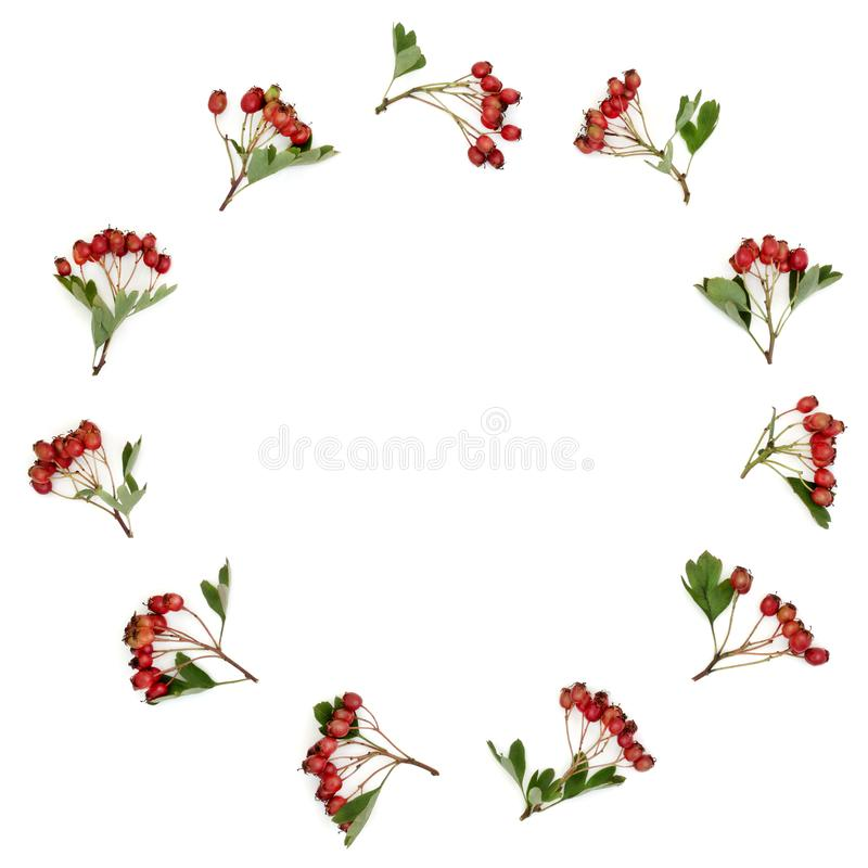 Hawthorn Berry Wreath royalty free stock images