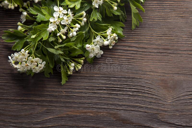 Hawthorn Blossom Flower on wood background royalty free stock photos