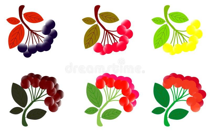 hawthorn Espinho com folhas Ilustra??o da aquarela no fundo branco ilustração stock