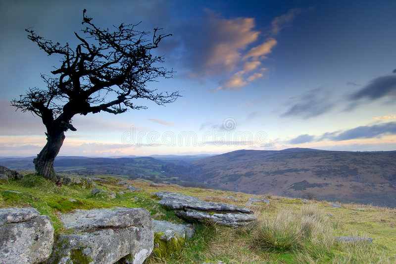 Hawthorn at sunrise. Sunrise at Combestone Tor Dartmoor South Devon England stock image
