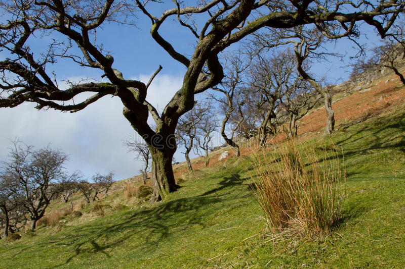Download Hawthorn Trees. Stock Image - Image: 22708021