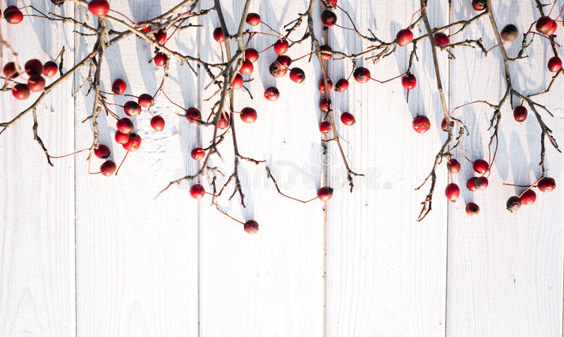 Hawthorn and white tree. Christmas background royalty free stock images