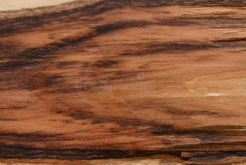 Hawthorn wood texture royalty free stock images