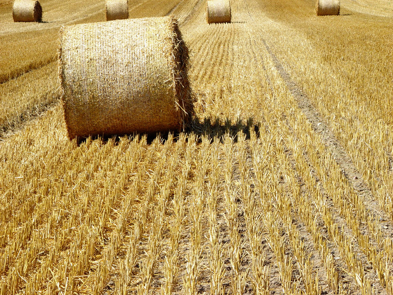 Download Hay 1 stock image. Image of cereal, bales, landscape, harvest - 11023