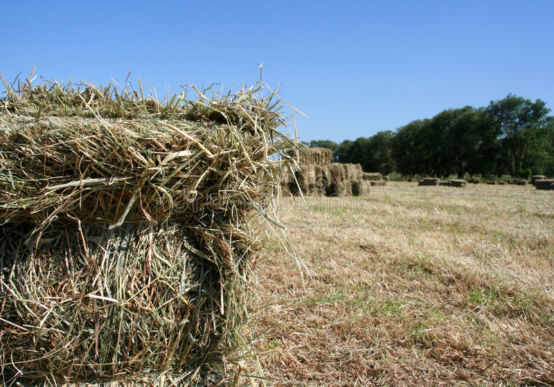 Download Hay Stock Images - Image: 149954