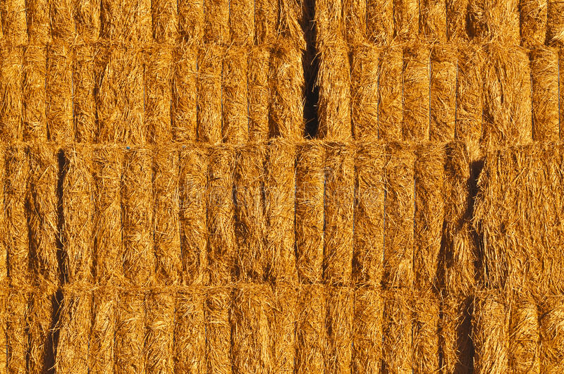 Download Hay stock image. Image of yellow, golden, southern, textures - 17474355