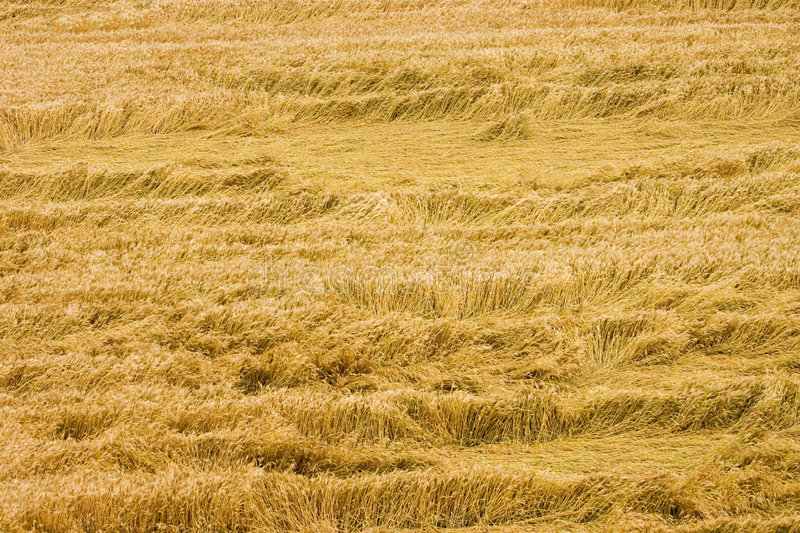 Download Hay stock image. Image of strand, tangle, abstract, yellow - 203309